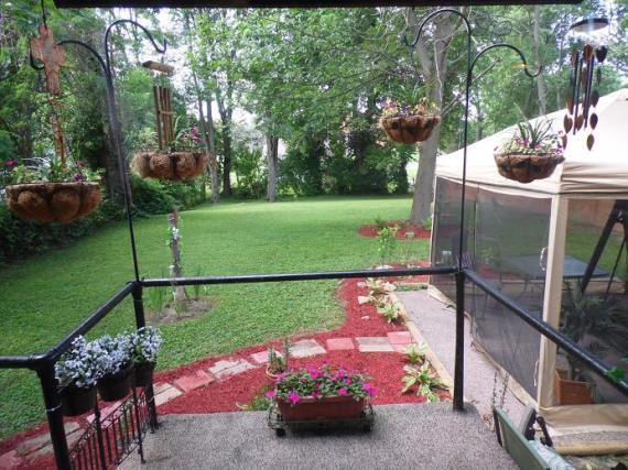 Backyard June